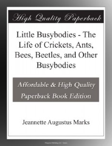 Little Busybodies – The Life of Crickets, Ants, Bees, Beetles, and Other Busybodies